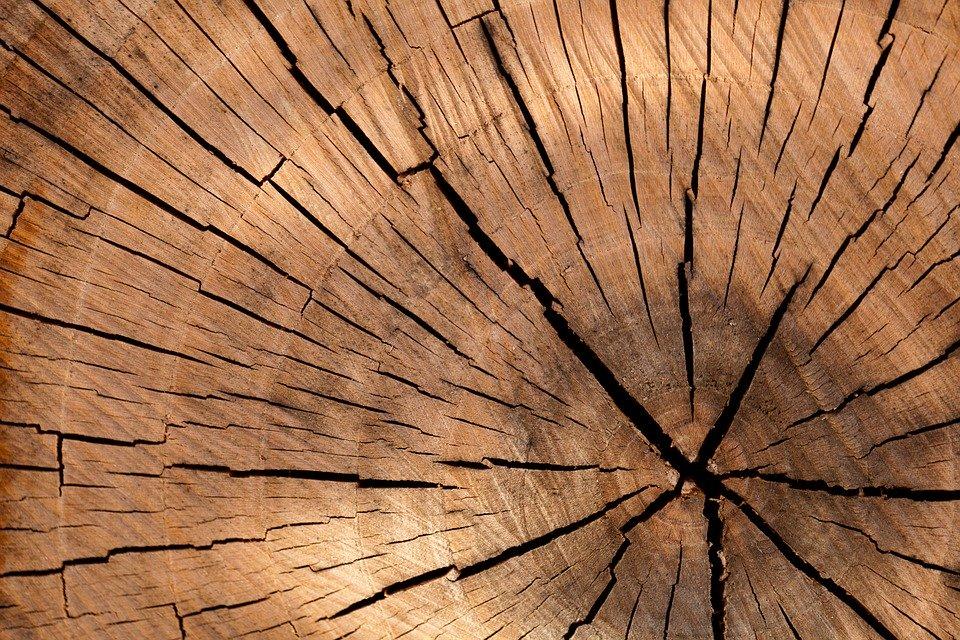 Wovor muss Holz geschützt werden
