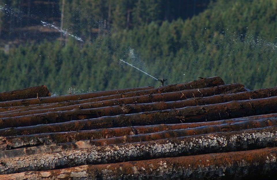 Wieso werden Holzstämme bewässert