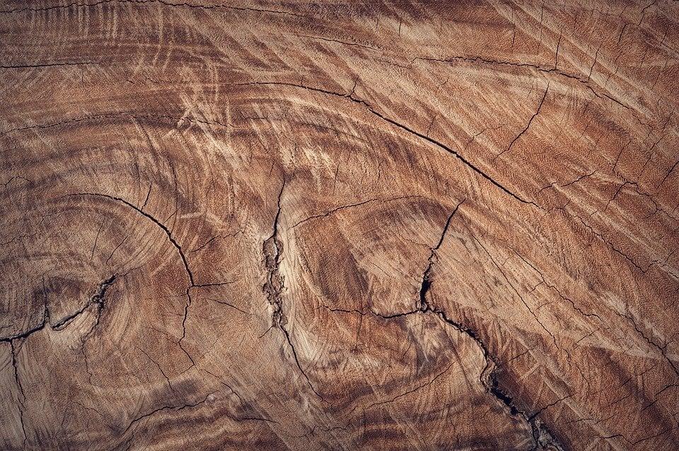 Welche Holzart ist am Härtesten