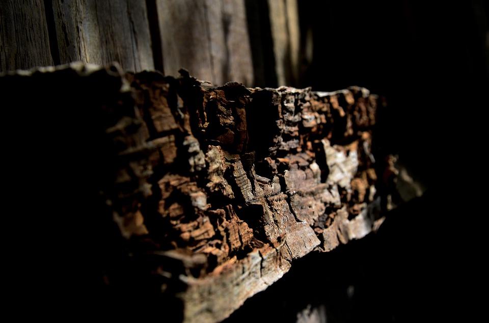Woran erkennt man einen Holzwurmbefall