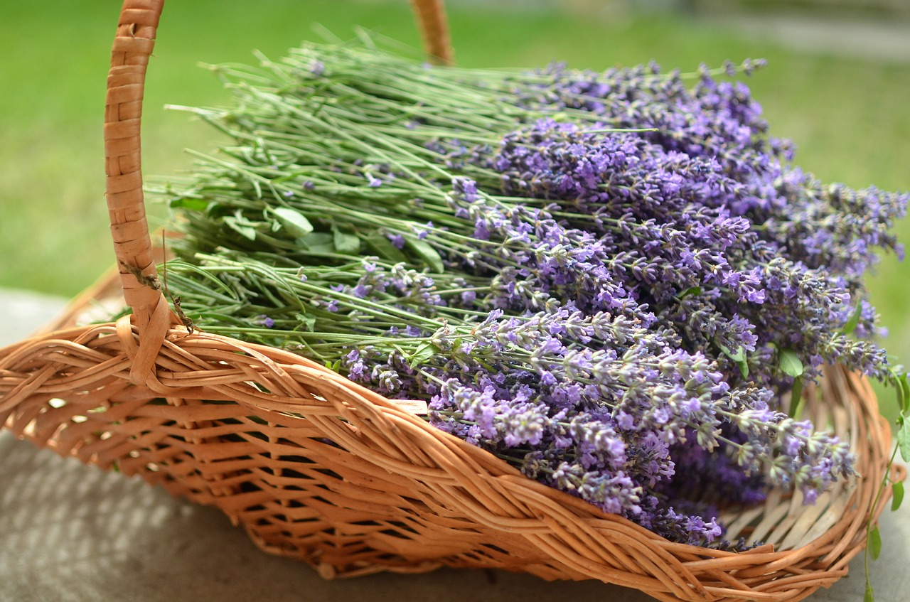 Lavendel schneiden