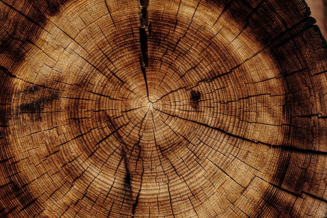 Welche Holzarten gibt es