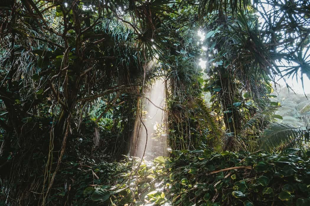 Wer holzt den tropischen Regenwald ab