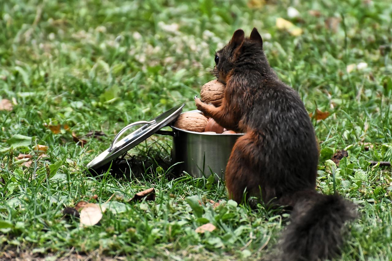 Welche Tiere fressen Walnüsse?